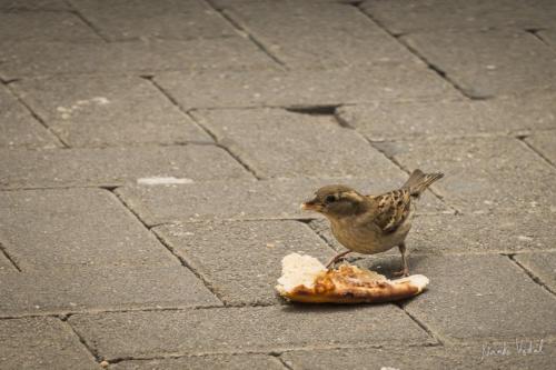 Pájaro comiendo pizza