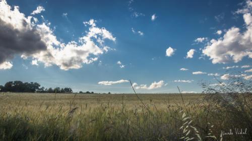 Campo en Castalla